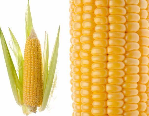 Indian Maize (Yellow Corn)